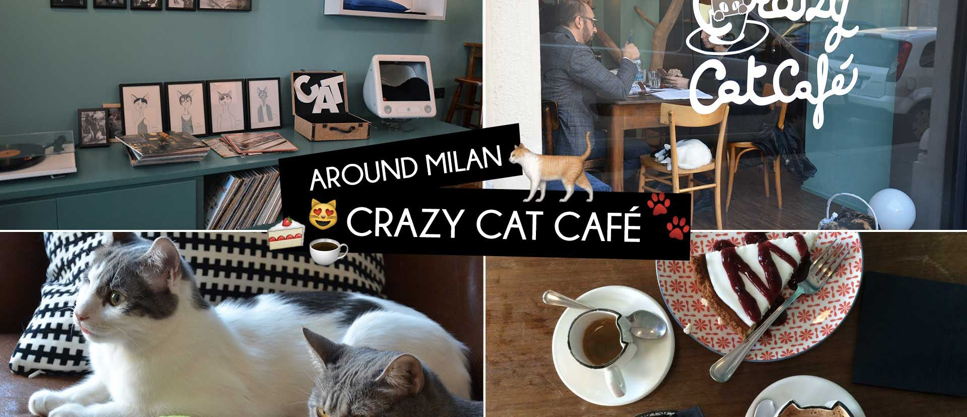 An unusual experience: visit the Crazy Cat Cafe near our hotel in Milan!